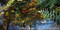 http://www.lucylab.org/corpo-dacqua/#more-1246