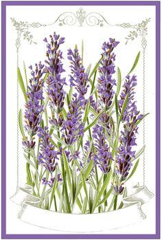 Lavender Labels Printable  //  The Graphics Fairy #lavender