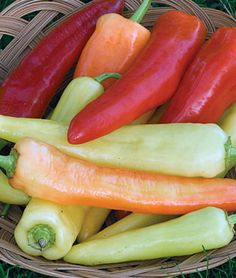 "Pepper, 'Sweet Banana' (Capsicum annuum) (DtM: 72) [Catalog #Plug] Description: An AAS Bronze Medal winner for 1941 and still extremely popular. Large, pointed fruits measure 6-7"" long and 1½"" across. The mild yellow peppers ultimately turn brilliant red. A favorite for pickling."