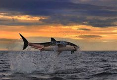 Amazing photo!