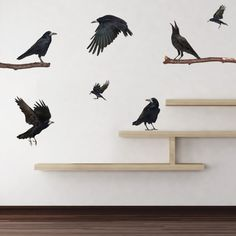 Wall decal ravens: we need these for the Raven Tools office!