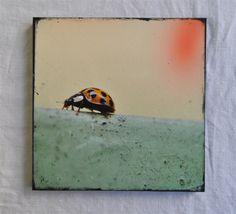 """Moving on"" - Fotokunst auf Holz (20x20 cm)"