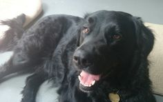 My dog Mason. Lore, Escondido, CA. 4/23/14.