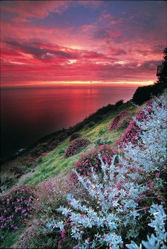 Sunset flowers at Post Ranch Inn, overlooking the cliffs of Big Sur, California.