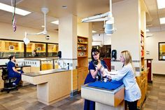 Building a transparent #veterinary practice—with glass, open spaces and values - Hospital Design - dvm360