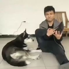 funny vines clean try not to laugh Funny Dog Videos, Funny Animal Memes, Funny Animal Pictures, Funny Memes, Dog Memes, Hilarious, Cute Funny Dogs, Cute Funny Animals, Cute Baby Animals