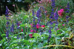 cottage garden - Google Search