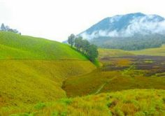 SAVANA ORO ORO OMBO is a very fascinating place in post V ascent of Mount Semeru. ♡ As the highest volcano in Java, #SemeruMountain has a very beautiful #savanna meadow. The local residents call it Oro-oro Ombo savanahs, which means a vast meadow. The overall area of ​​savanna reaches 100 hectares.