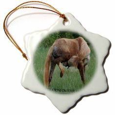 3dRose Funny Horse Green Background Congratulations On Vasectomy , Snowflake Ornament, Porcelain, 3-inch