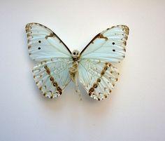 http://www.boumbang.com/sabatte-lionel/ Lionel Sabatte, reparation de papillon