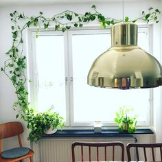 Indoor Flowers, Indoor Plants, Cozy Place, Shades Of Green, House Plants, Planting Flowers, Greenery, Interior Decorating, Ceiling Lights