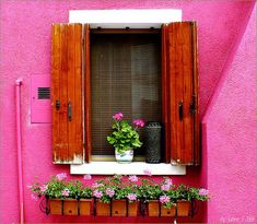 Pretty Pink Tulips had a wonderful post this. Flower Window, Pink Houses, Dream Houses, Everything Pink, Window Boxes, Flower Boxes, Flowers, Windows And Doors, Shutters