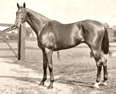 Isinglass - 1890-1911 was a British Thoroughbred racehorse who won the English Triple Crown. He was the the sire of Star Shoot & grandsire of Sir Barton, the American Triple Crown winner 1919.