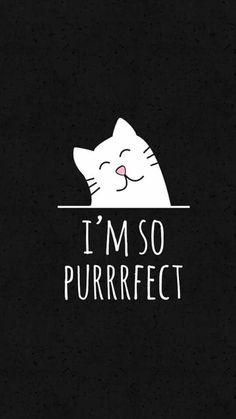Easy Doodles Drawings, Simple Doodles, Cute Panda Wallpaper, Cat Wallpaper, Crazy Cat Lady, Crazy Cats, Funny Cat Jokes, Iphone Wallpaper Themes, Outdoor Acrylic Paint