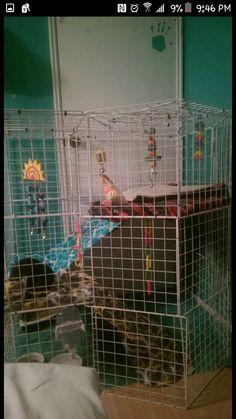 Rabbit nic cage