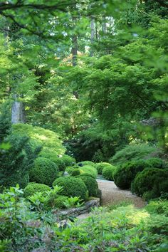 garden path with boxwood, maples