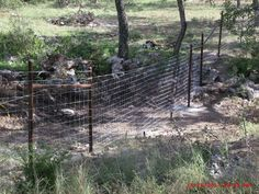 Covered Chain Link Dog Enclosure Dog Enclosures Fortress
