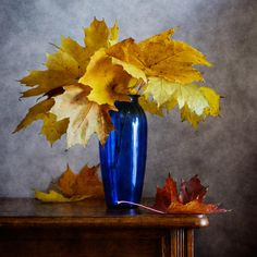Still Life (5) by Nikolay Panov on 500px