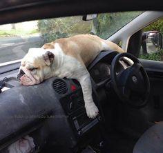 The best driver! #Bulldog