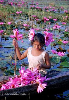 A young girl in a lotus pond