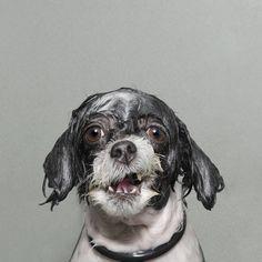 Categoría #retratos: Perros mojados es una serie de fotos de animales durante el baño. Según al descripción de la autora, es un momento de vulnerabilidad para los perros, en ese instante antes de que empiecen a sacudir la cabeza.