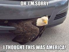 Oh I'm sorry!   http://ift.tt/2dAT0YG via /r/funny http://ift.tt/2dTf9iK  funny pictures