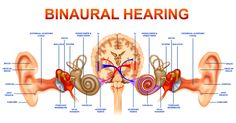 anatomical structure of ears - Google Search