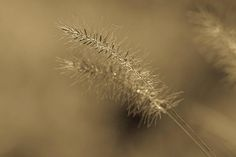 In Haze By Olga Olay Photography  #HomeDecor, #OlgaOlay, #
