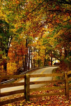Beautiful fall colors in a leaf canopy over the road. Autumn Scenes, Seasons Of The Year, All Nature, Fall Pictures, Fall Pics, Belle Photo, Autumn Leaves, Fall Trees, Paths