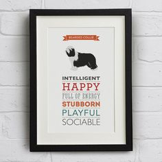 Bearded Collie Dog Breed Traits Print - Great Gift for Bearded Collie Lovers!