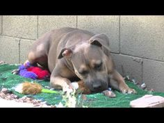 Puppy Hasbro Gets a Chance to Play with Hyper Pet Shakes - YouTube