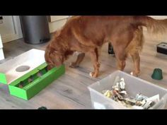 Binnen spelletjes voor de hond! - YouTube Diy Dog Toys, Puppies Tips, Dog Training, Your Dog, Chihuahua, Dogs, Animals, Diy Dog, Home
