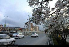 #Spring#Tehran
