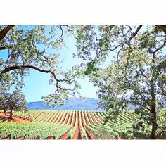 N A P A  V A L L E Y  PC: @visitnapavalley #Napa #NorCal #BayArea #VisitNapaValley #NapaValley #winetime #wine #wino #vino #humpday #SiliconValley #summer #summertime #winetasting #NapaWinery by livetera