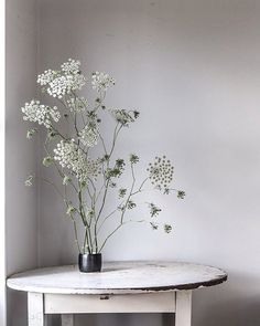 Good morning from the Dumaresq Valley. This Queen Anne's Lace is so easy to grow, even from seed. I just planted it in a few beds this year, but next year I am dreaming of a paddock of it, intermingled with pale green agaves and tall fronds of grass blowing in the wind. Annabelle @the_dailys xx #countrystyletakeover #countrystyleloves