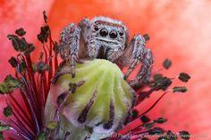 Alberto Ghizzi Panizza Owl, Bird, Animals, Animales, Animaux, Owls, Birds, Animal, Animais