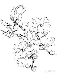 白描写生画谱:白描玉兰 Floral Illustrations, Botanical Illustration, Fabric Painting, Painting & Drawing, Colouring Pages, Coloring Books, Japanese Drawings, Simple Line Drawings, Flower Sketches