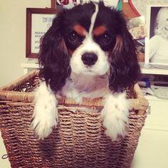 beautiful in a basket ♥...