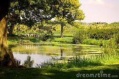 Nice landscape -nature with tree and water