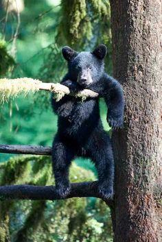 Animals And Pets, Baby Animals, Funny Animals, Cute Animals, Wild Animals, Amor Animal, Mundo Animal, Amazing Animals, Animals Beautiful