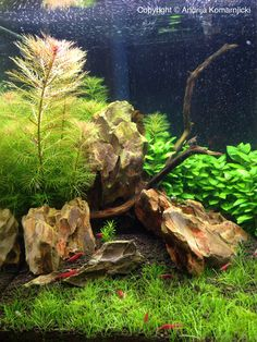 Nano shrimp tank - Gorgeous Rock Garden