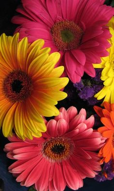 Sunflowers And Daisies, All Flowers, Pretty Flowers, Colorful Flowers, Spring Flowers, Gerbera Daisies, Beautiful Flowers Garden, Amazing Flowers, Beautiful Roses
