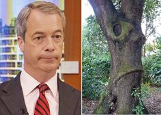 A little bit barking: Luckily this Farage of forest is not an E-Yew tree. Nigel Farage has become known for hisside-splitting poses