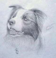Border collie drawing by Fathema Zahra
