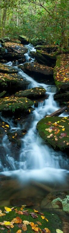 Great Smoky Mountains National Park. Everyone should visit at least once in their life; you will thank yourself.