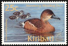 Wandering Whistling Duck stamps - mainly images - gallery format