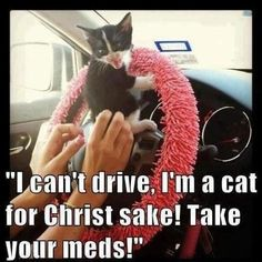 Responsible cat owners don't let their kittens drive.