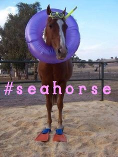 #seahorse..think mom would like this lol