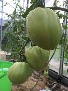 Абаканский розовый Honeydew, Fruit, Food, Meal, Honeydew Melon, The Fruit, Eten, Meals
