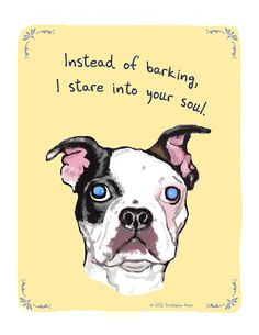 Anyone who has a Boston Terrier, or a mix of one like I do, will understand this.